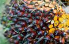 Falling CPO prices threaten Golden Agri Resources\'s growth