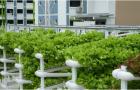 Singapore to develop 18ha agri-tech innovation park