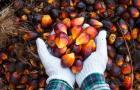 Bumitama Agri's profits bloom 26% to $23.58m in Q1