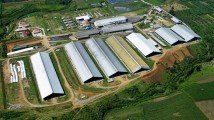Japfa net profit grew 54.3% YoY to US$118.5m in H1